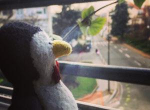 Pingouin songeur à la fenêtre